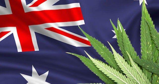 marijuana-australia-cannabis